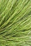 зеленый цвет травы длинний Стоковое Фото