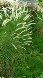 зеленый цвет травы длинний Стоковые Фото