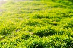 зеленый цвет травы дня солнечный Селективный фокус Текстура травы Предпосылка для конструкции естественные обои Концепция весны Стоковые Изображения