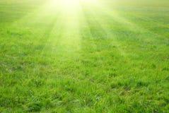 зеленый цвет травы излучает солнце Стоковое Изображение RF