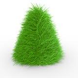 зеленый цвет травы конуса Стоковые Фотографии RF