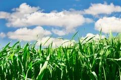 зеленый цвет травы над небом Стоковое фото RF