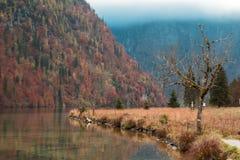 зеленый цвет травы осени даже выходит померанцовая тихая погода взгляда стоковые изображения rf