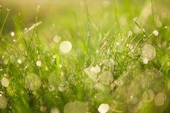 зеленый цвет травы падений росы свежий Стоковое Изображение RF