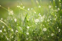 зеленый цвет травы падений росы свежий Стоковые Фотографии RF