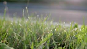 зеленый цвет травы падений росы сток-видео