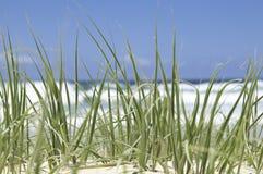 зеленый цвет травы пляжа Стоковые Фото