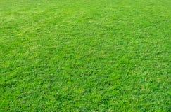зеленый цвет травы поля предпосылки Картина и текстура зеленой травы стоковые изображения rf