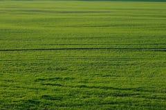 зеленый цвет травы поля Стоковая Фотография