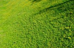 зеленый цвет травы поля Стоковое Изображение