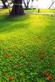 зеленый цвет травы поля Стоковые Фотографии RF