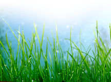 зеленый цвет травы предпосылки мягкий Стоковые Изображения