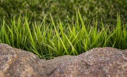 зеленый цвет травы предпосылки свежий текстура травы естественная Стоковые Изображения