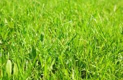 зеленый цвет травы предпосылки Стоковое Фото