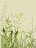 зеленый цвет травы предпосылки Иллюстрация вектора