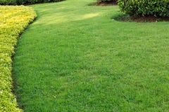 зеленый цвет травы предпосылки Стоковое Изображение