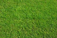 зеленый цвет травы предпосылки Стоковое Изображение RF