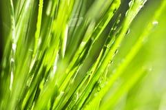 зеленый цвет травы предпосылки Стоковое фото RF