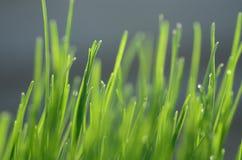 зеленый цвет травы предпосылок Стоковое Изображение