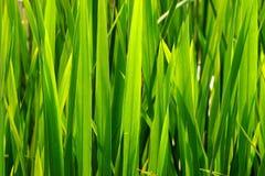 зеленый цвет травы прорастания стоковое фото rf