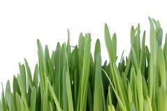 зеленый цвет травы пускал ростии Стоковые Изображения