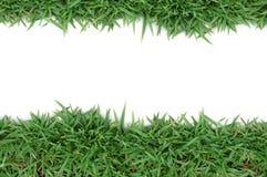 зеленый цвет травы рамки Стоковые Изображения RF