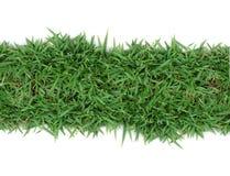 зеленый цвет травы рамки Стоковая Фотография RF
