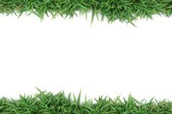 зеленый цвет травы рамки Стоковые Фотографии RF