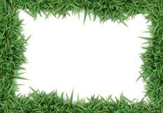 зеленый цвет травы рамки Стоковое Изображение