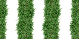 зеленый цвет травы рамки Стоковые Фото