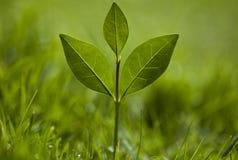 зеленый цвет травы растет завод Стоковая Фотография