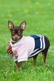 зеленый цвет травы собаки смешной немногая Стоковое фото RF