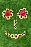 зеленый цвет травы стороны сделал солнцецветы стоковое изображение