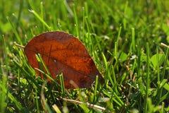 зеленый цвет травы фокуса крупного плана селективный Стоковые Фотографии RF