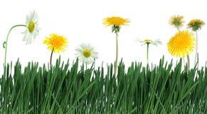 зеленый цвет травы цветка Стоковые Фотографии RF