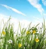 зеленый цвет травы цветка Стоковое Изображение RF