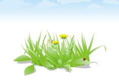 зеленый цвет травы цветка spreen вектор Стоковое Изображение RF