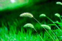 зеленый цвет травы щетинки Стоковое Изображение