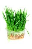 зеленый цвет травы Стоковые Фотографии RF
