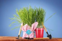 зеленый цвет травы 2 flowerpot Стоковая Фотография RF