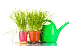 зеленый цвет травы 2 flowerpot Стоковое Изображение