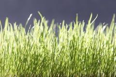 зеленый цвет травы Стоковая Фотография RF