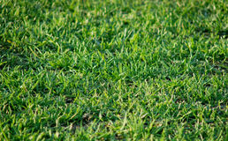 зеленый цвет травы Стоковые Фото