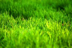 зеленый цвет травы Стоковая Фотография