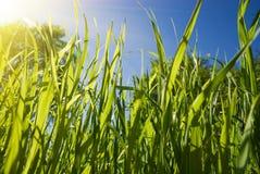 зеленый цвет травы стоковое фото