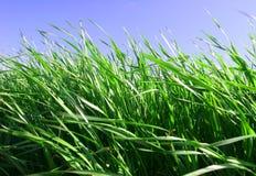 зеленый цвет травы Стоковое фото RF