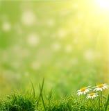 зеленый цвет травы bacground Стоковые Фотографии RF