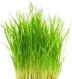 зеленый цвет травы bush стоковые фотографии rf