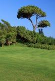 зеленый цвет травы conifer стоковое изображение rf
