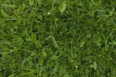 зеленый цвет травы dof предпосылки отмелый Крупный план взгляд сверху текстуры зеленой травы Свежая лужайка Стоковое Изображение RF